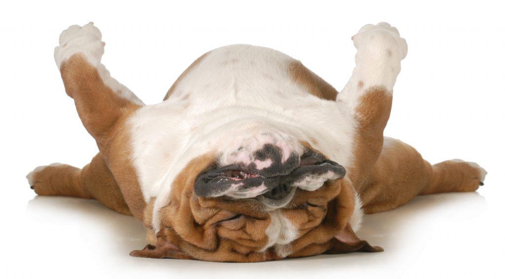 Subheaders - sleeping dog