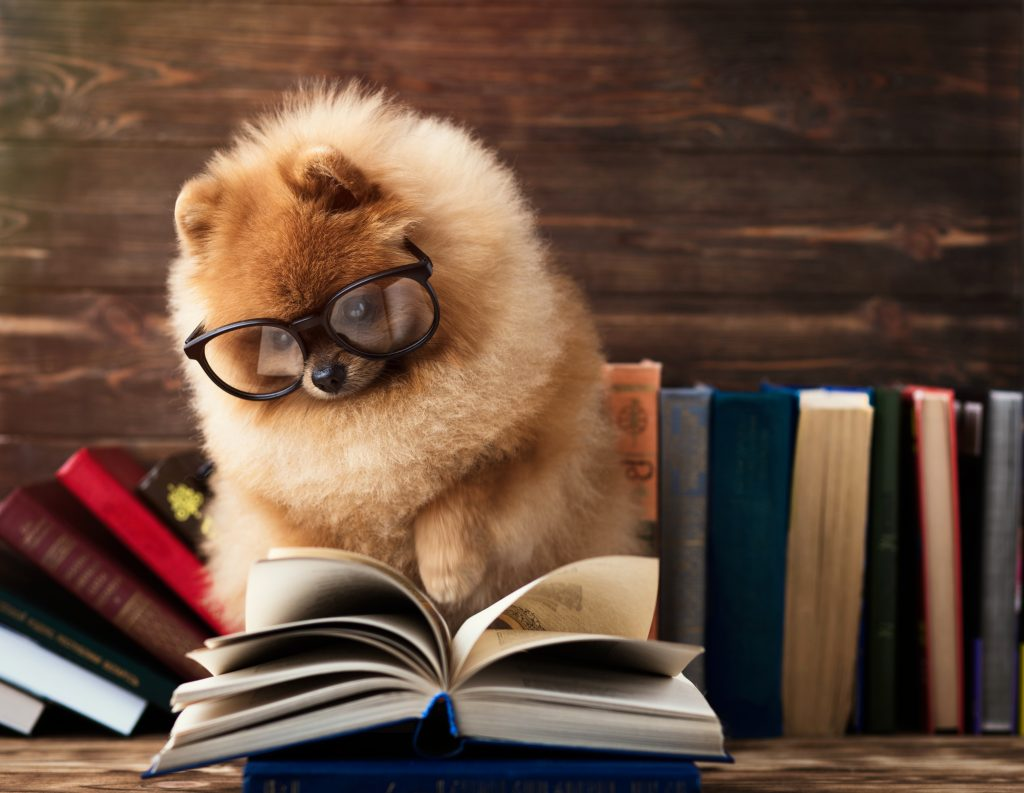 Subheaders make reading easy - dog reading a book